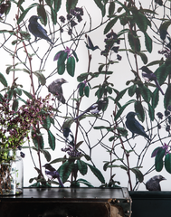 Folia Birds Light Wallpaper