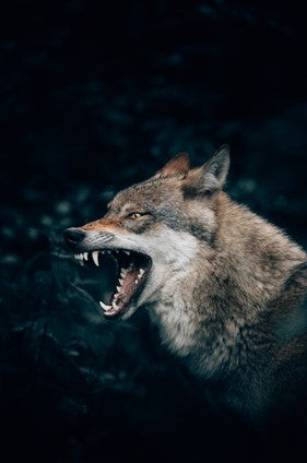 Camping Safety and How To Avoid Dangerous Animals - Coywolf