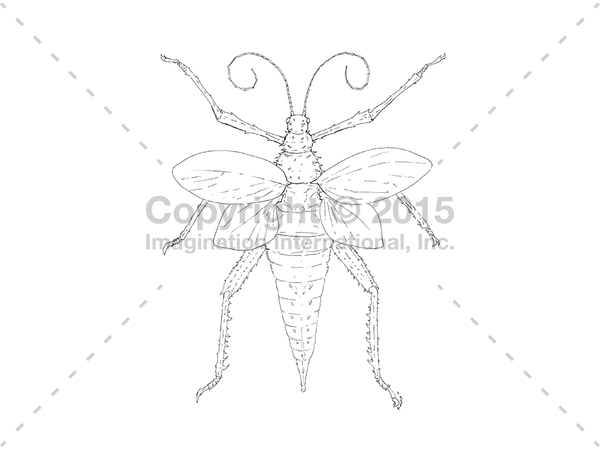 Downloadable Line Art for Coloring- Bugs