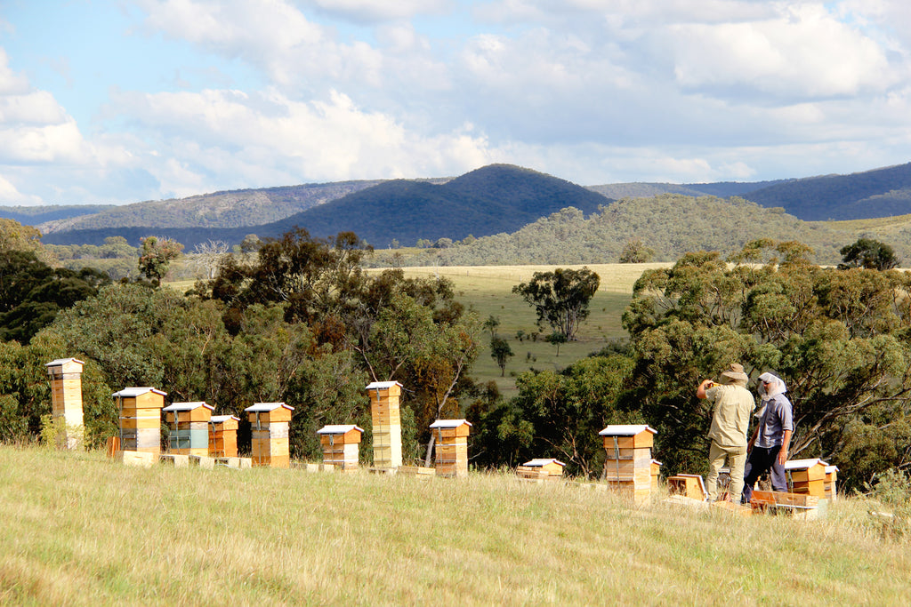 Malfroy's Gold Central West Apiary