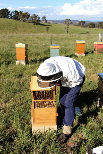 Malfroy's Gold Tim Malfroy Warre Hive Opening