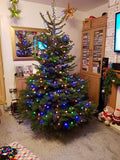 6ft - 7ft Real Christmas Tree