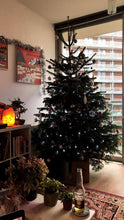 Load image into Gallery viewer, 7ft - 8ft Real Christmas Tree
