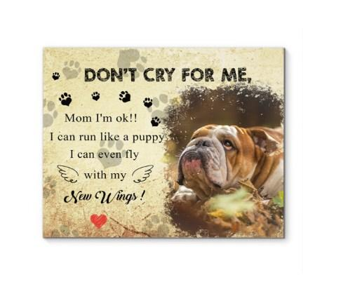English bulldog - Don't cry for me canvas