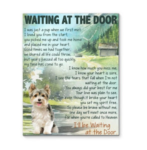 Yorkshire Terrier - Waiting at the door Canvas