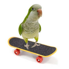 Small Bird Skateboard Toy