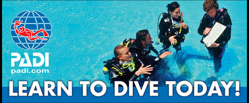 PADI Scuba Diving Courses Cape Town
