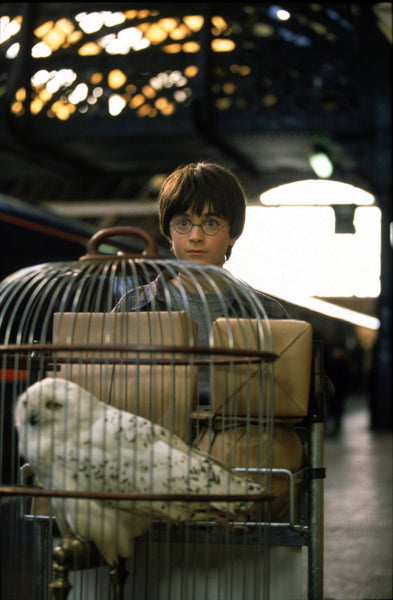 Harry Potter et Hedwige à la gare