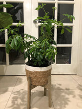 Load image into Gallery viewer, Planter Basket on Stand - Small