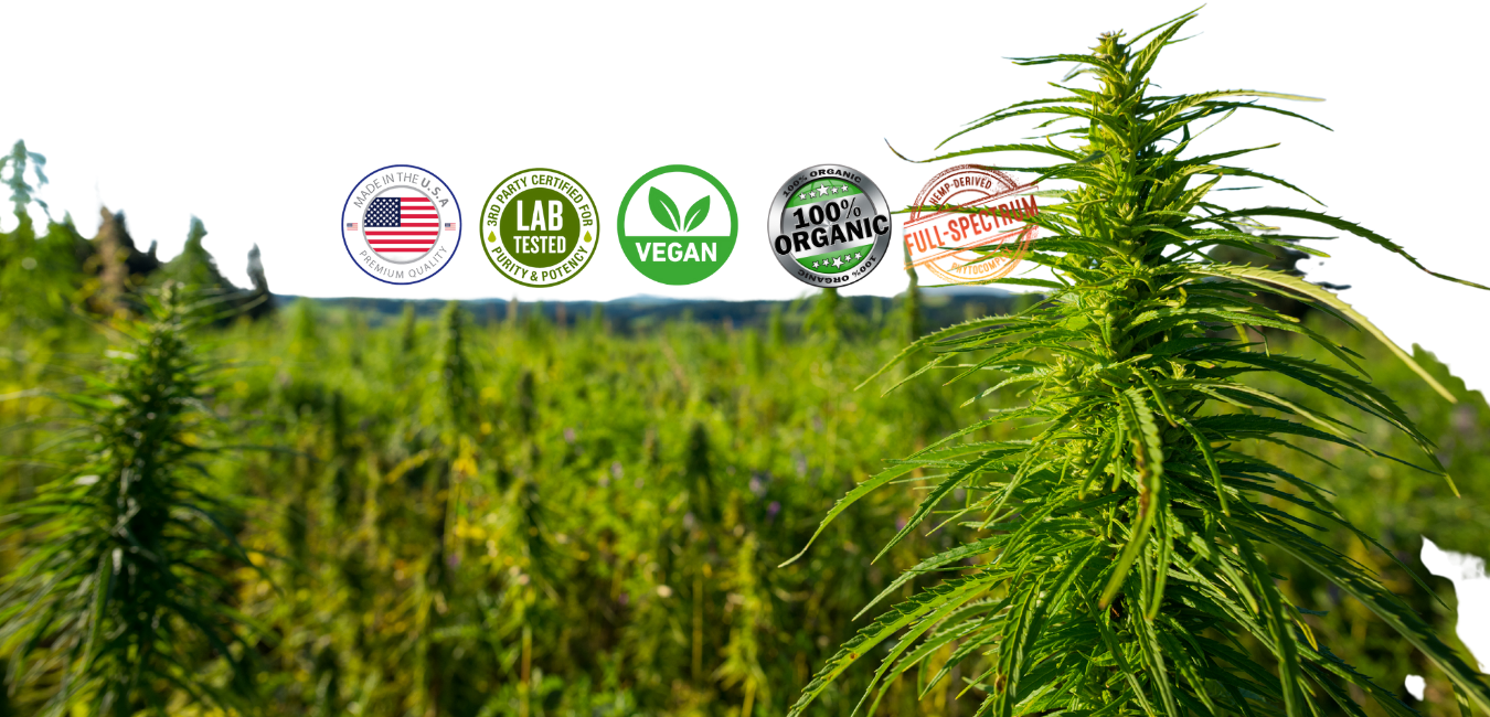 Blue Gem Hemp proudly makes American grown, organic hemp-based CBD products that are designed to promote your health & wellness, and help you prepare for a better tomorrow.