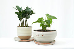 Wheel Thrown Planters