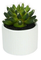 Green Echeveria Succulent Plant in Ceramic White Pot