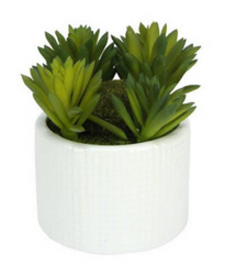 Decorative Artificial Succulent Plant in White Ceramic Planter