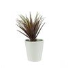 "7.5"" Artificial Potted Red and Green Aloe Succulent Plant"