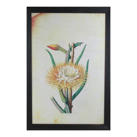 "26"" Yellow and Green Desert Baileya Flower with Black Photo Frame"
