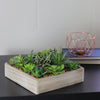 "10"" Decorative Artificial Succulent Plant Arrangement in a Garden Box"