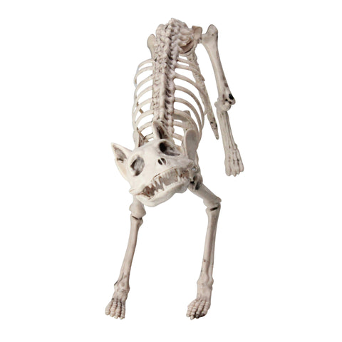 "18.5"" Ivory and Gray Standing Skeleton Cat Halloween Decoration"