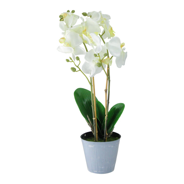 "16.5"" White and Green Potted Artificial Phalaenopsis Orchid Flower Plant"