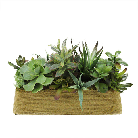 "12.5"" Green Artificial Mixed Succulent Arrangement in Planter Box"