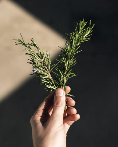 Rosemary sprig from the garden