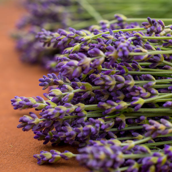 What's So Special About Lavender?