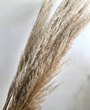Load image into Gallery viewer, Tall Natural Dried Pampas Stems (price per stem)