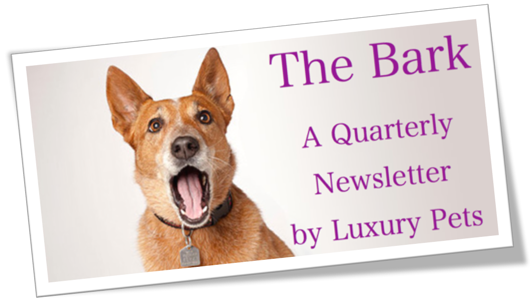 Introducing The Bark by Luxury Pets
