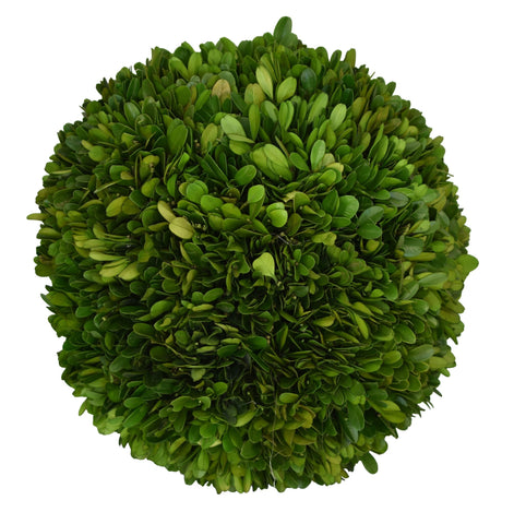 "Preserved Boxwood Ball 10"" - 1"