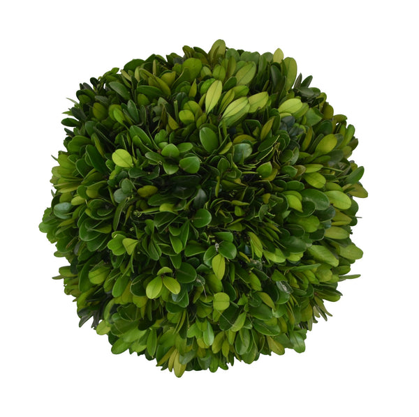 "Preserved Boxwood Ball 8"" - 1"