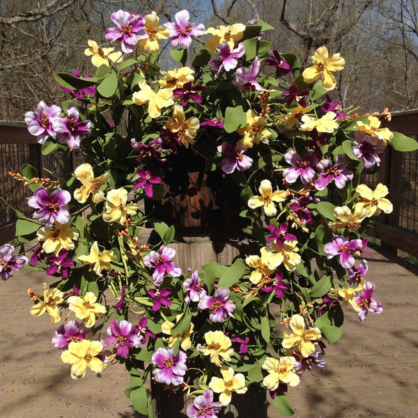 "Fresh Picked Pansies Wreath - 22"" - 4"