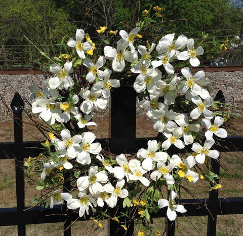 "Blooming Dogwood Spiral Wreath - White - 22"" - 3"
