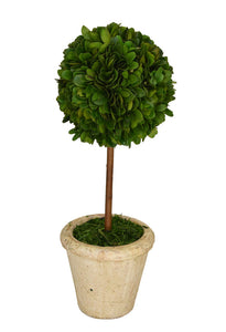 Preserved Boxwood Topiary 16""