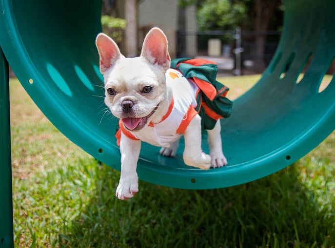dog park equipment for housing community or apartment complex