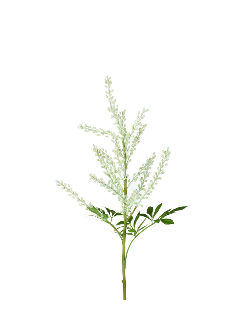 NEW: White Astilbe