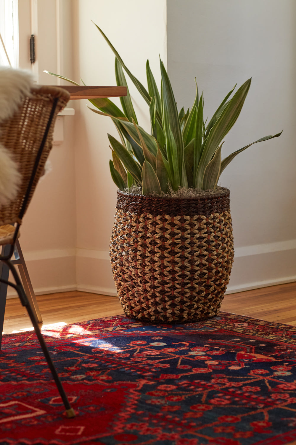 Sansevieria (snake plant) in decorative basket near home office desk