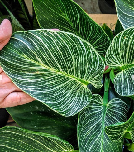 Biophilia: The Benefits of Plants in the Workplace