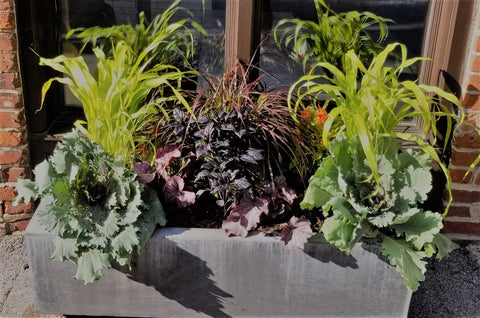 Fall urban container planting