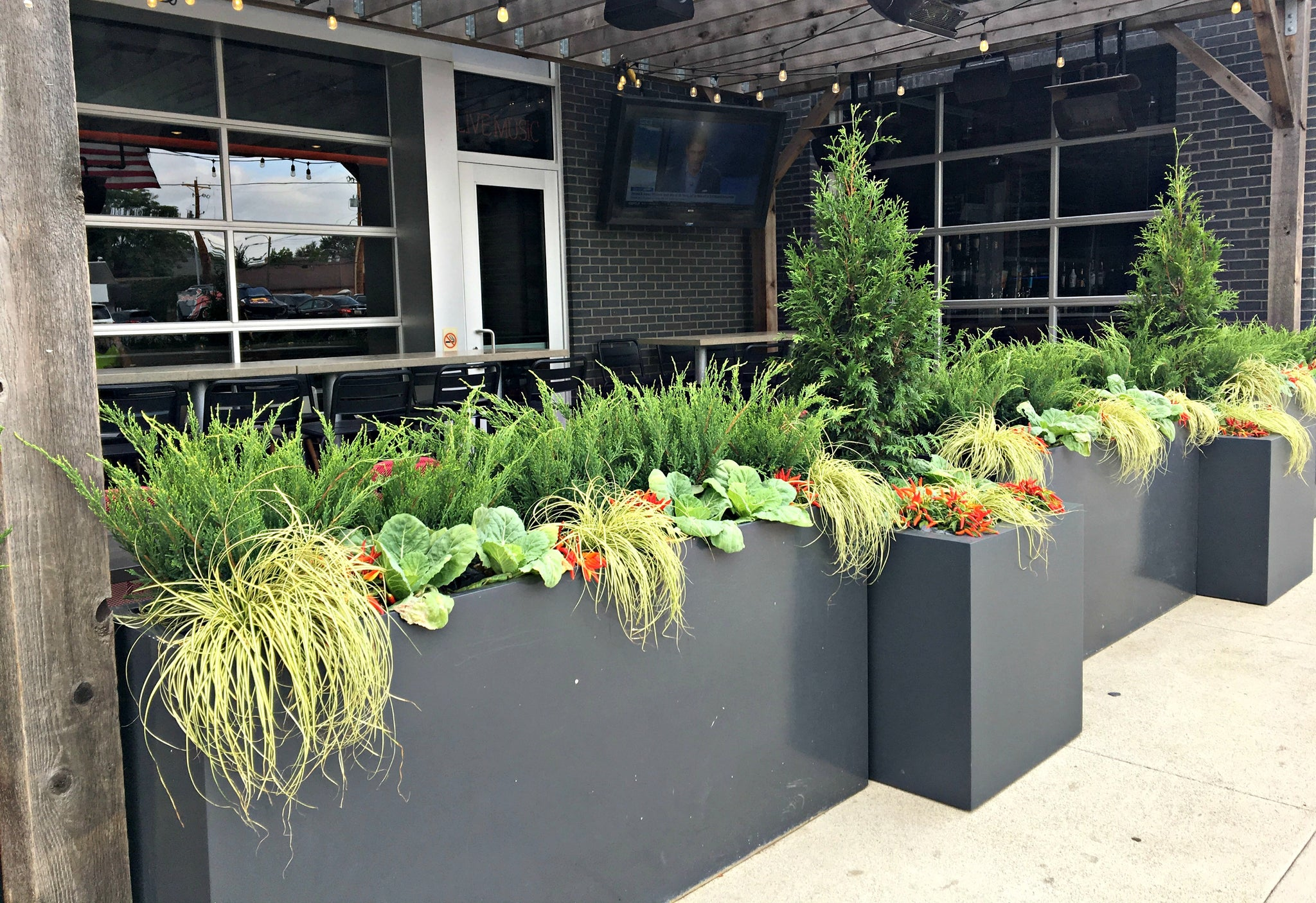 A collection of sidewalk and patio containers planted with fall annuals and evergreens to provide a lovely urban landsacpe.