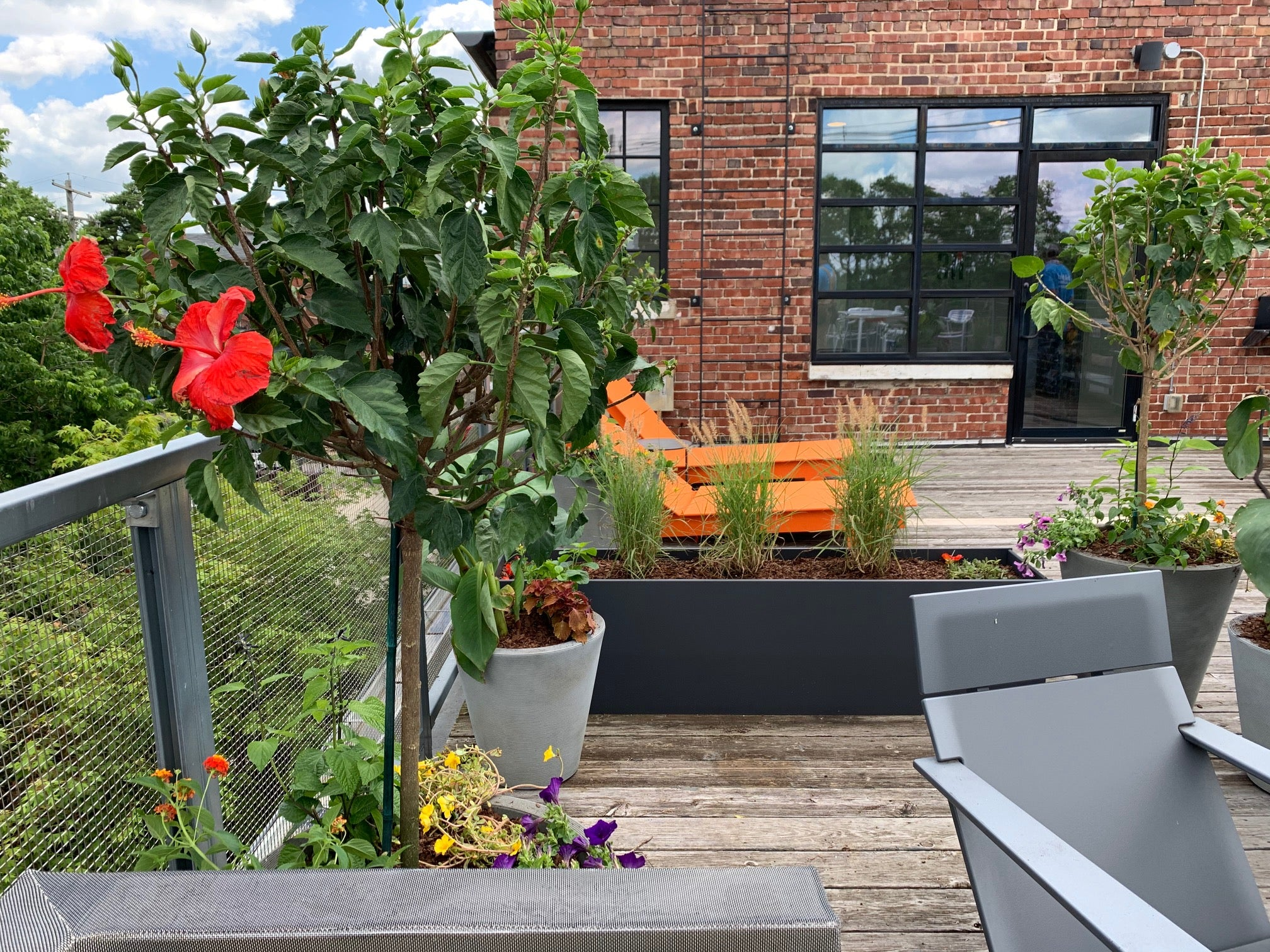 Tropical plants and annual flowers in containers on a rooftop patio