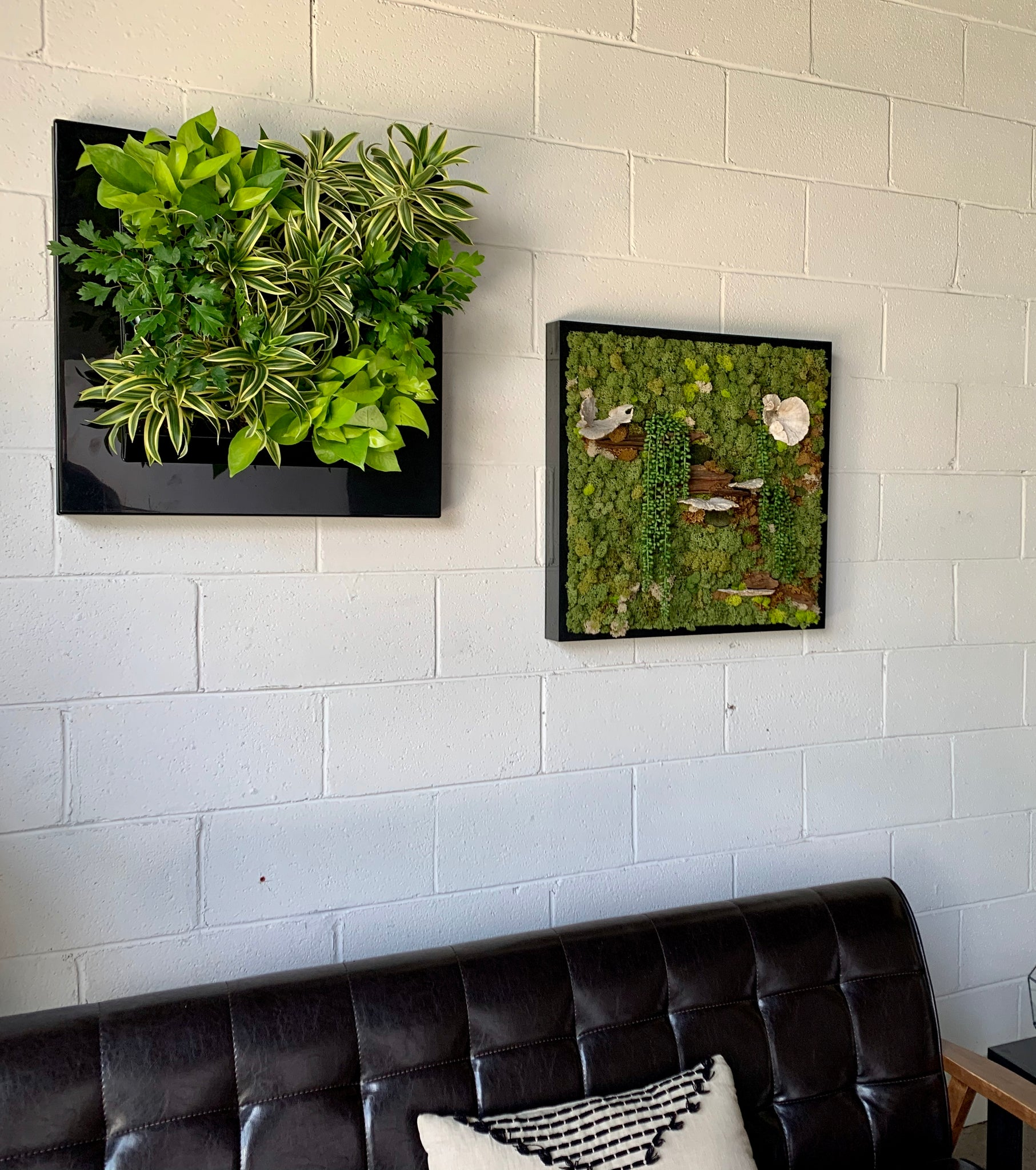 A small, black framed, live plant wall and a small, black framed moss wall in an office lobby.