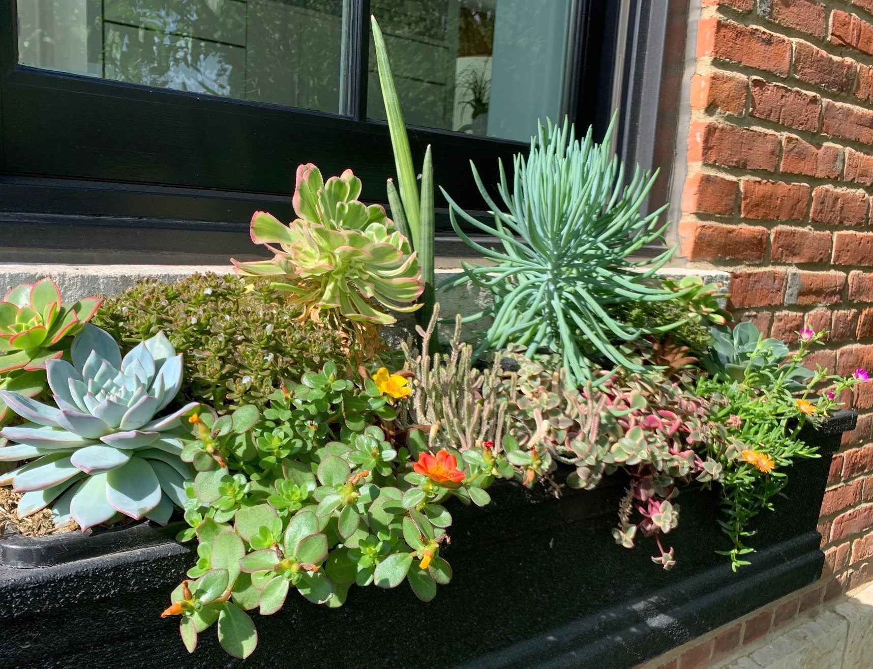 custom window box with succulents