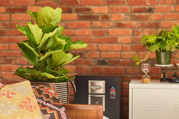 Zen Den: Cool plants to set a cool mood