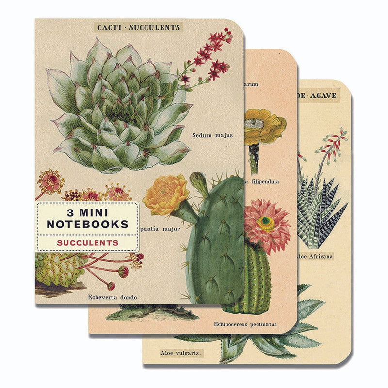 MINI LIBRETAS SUCCULENTS