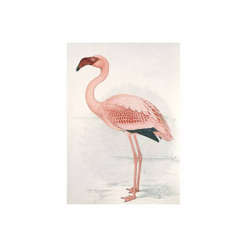 FLAMINGO CLAUDE FINCH-DAVIES