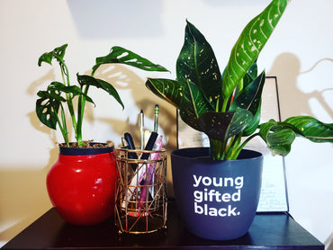 "Young Gifted Black (6"" Inch Planter)"