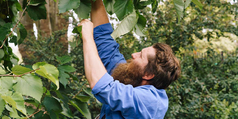 A Guide to Foraging with Wross the Forager