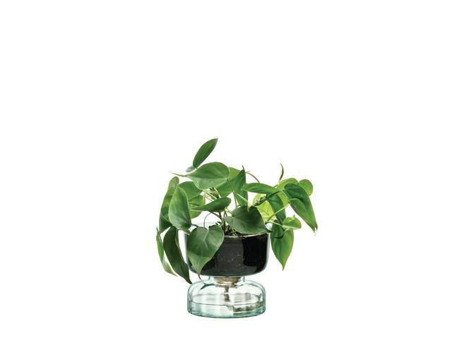 Canopy Self Watering Low maintenance vase 13cm