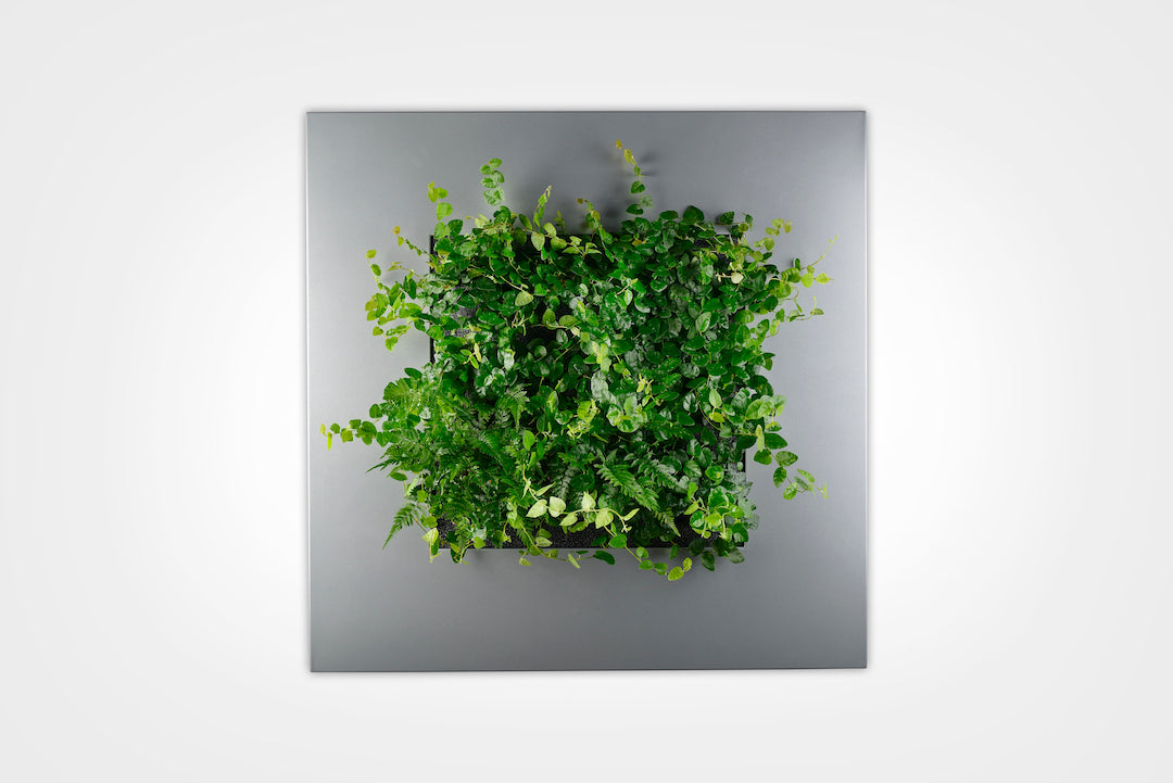 LIVE PICTURE - 1 Living wall frame