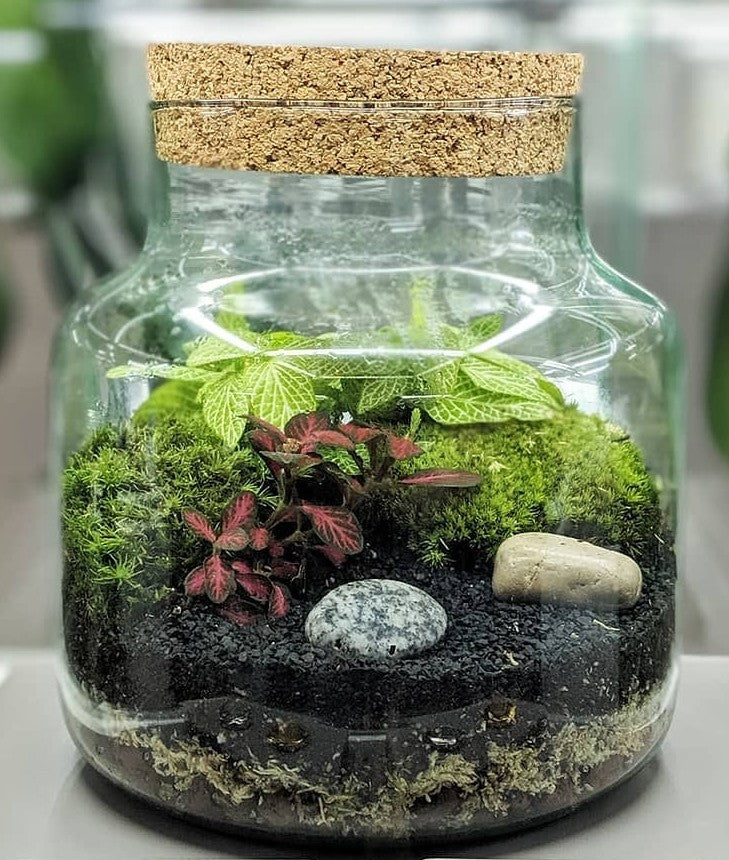 Cork Jar Terrarium Kit
