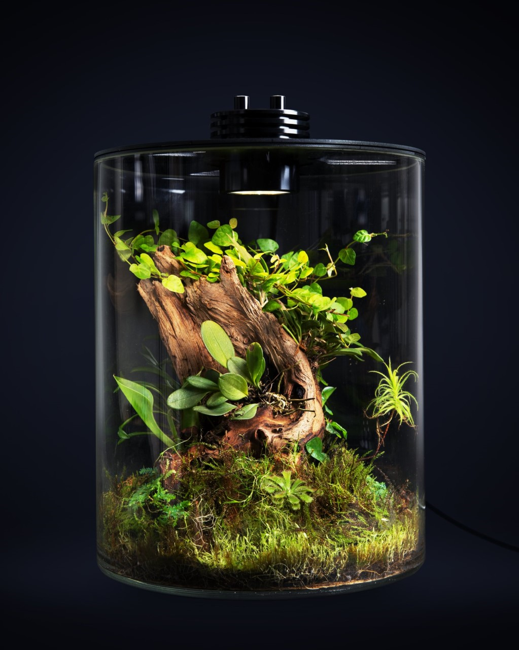 Terrarium Baiosphere Tube - & Online Private Tuition